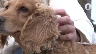 Собака породы спаниель и 6 ее щенков ищут семью / Утренний эфир