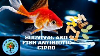 Fish Antibiotics: Cipro