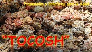 EL TOCOSH   PROPIEDADES Y BENEFICIOS PARA LA SALUD