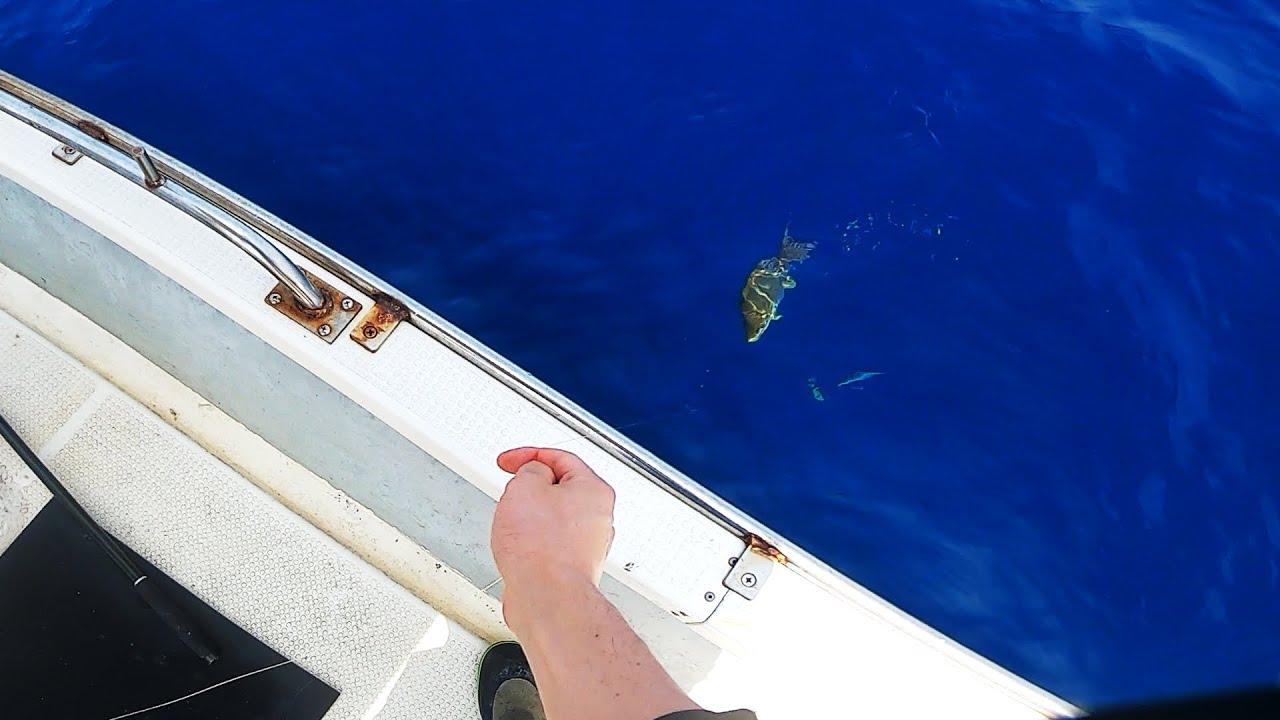 今一番美味しい魚をまったり釣ろうと思ったら予想外の忙しさに... I tried to catch the best fish of the day at a slow pace, but I