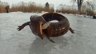 Ice Fishing Salamander