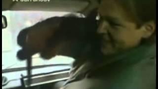 Divoká svině (1990) - ukázka