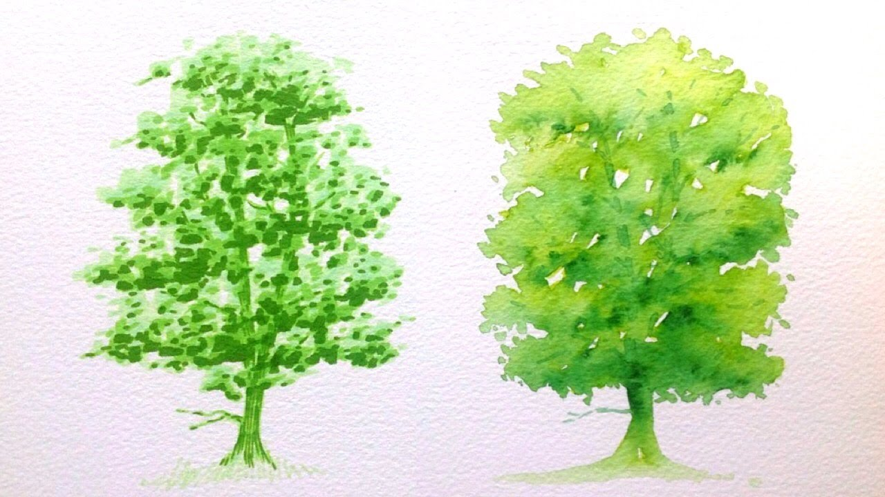 drawing a tree with promarker vs aquamarker tutorial youtube - Architecture Drawing Of Trees