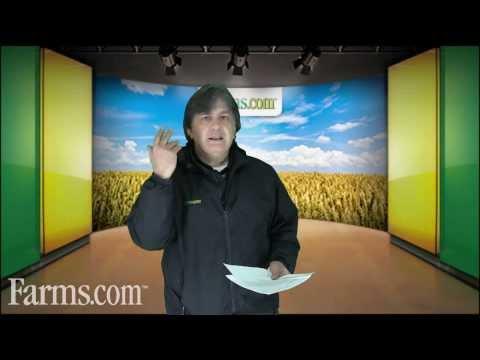 Bullish for Corn Futures Prices, USDA Surprises With Latest WASDE Report. Farms.com