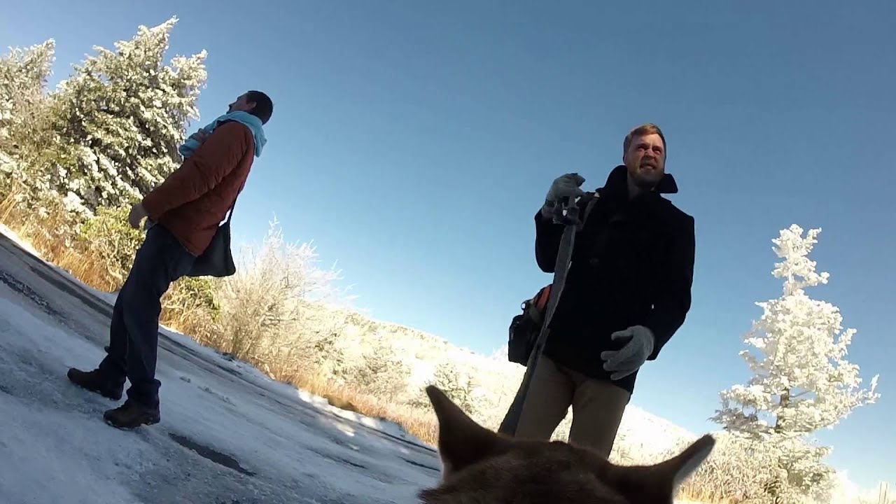 GoPro Our Snowy Wedding From Our Dogs Perspective YouTube - Couple let their dog film their snowy wedding day and the result was magical