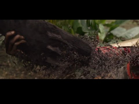 Black Panther Death Scene Avengers Infinity War In Hindi Youtube