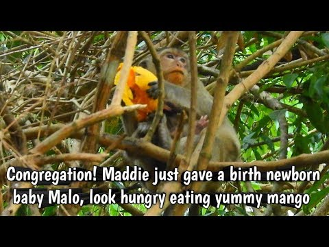 Natural Wildlife - Congregation! Maddie just gave a birth newborn baby Malo, look so hungry