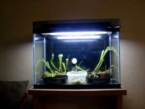 New Carnivorous Plant Terrarium Youtube
