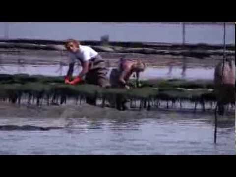 Ostréiculture, ostréiculteur, le metier de l'élevage des huîtres Marennes Oléron