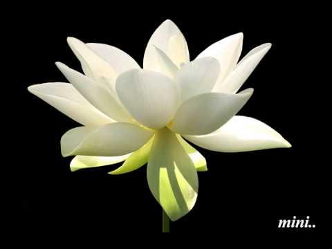 Vella Thamara Mottu Pole..!!(Mini Anand)