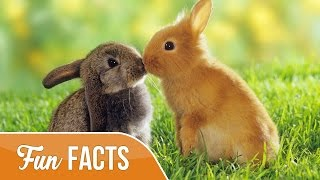 10 Fun Facts About Rabbits