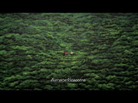 ฟังเพลง - จดหมายจากใครคนหนึ่ง เขียนไขและวานิช X Suntur - YouTube