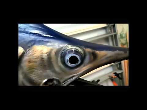 Painting A Sail Fish Replica: Sailfish Mounts