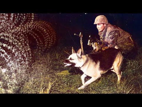 The Secret Vietnam War Dogs