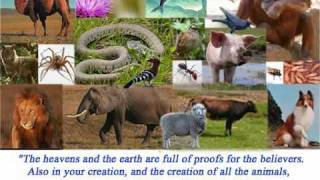 Animals Mentioned In The Quran