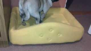 как сделать лежанку для собаки своими руками