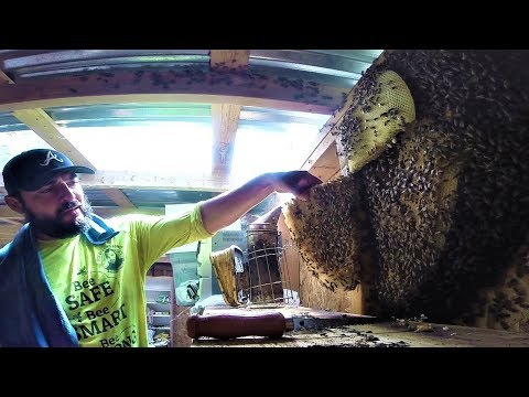 Exposed bee hive removal In San Benito Tx by Luis Slayton of Bee Strong Honey