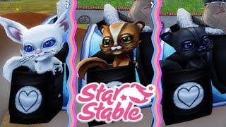 Bildresultat för squirrel starstable