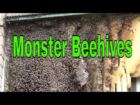 Top Five Most Massive Bee Hives