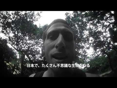 友ヶ島の虫 (bugs of tomogashima)