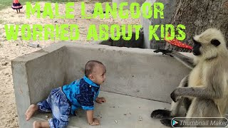 Download Male langoor is worried about kids safety and trying to say Mp3 and Videos