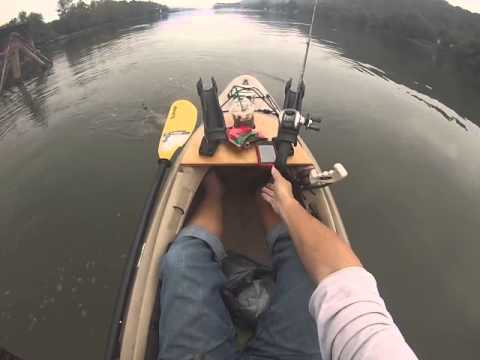 Monster Ohio River catfish caught on kayak
