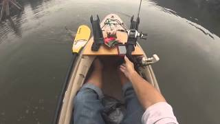 Monster Ohio River catfish caught on kayak