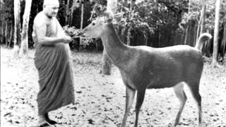 Ajahn Chah -  Clarity Of Insight