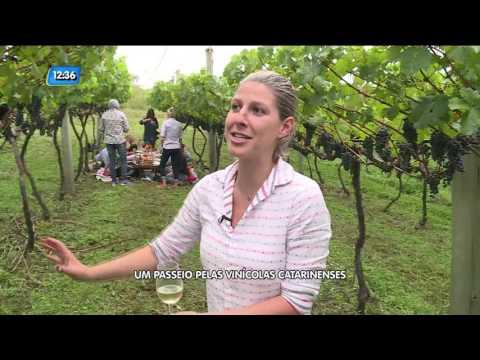 Um Passeio Pelas Vinícolas Catarinenses