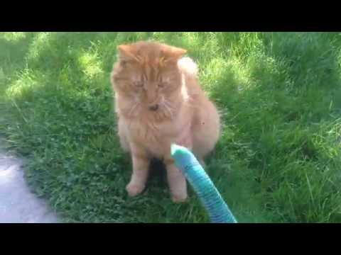 cat neutering after care