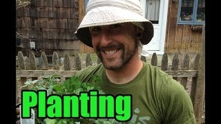 Gardening Tips - Planting Your Plants - The Vegan Zombie