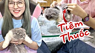 [Cô Ngân Vlog] Hành Trình Dẫn Mèo Con