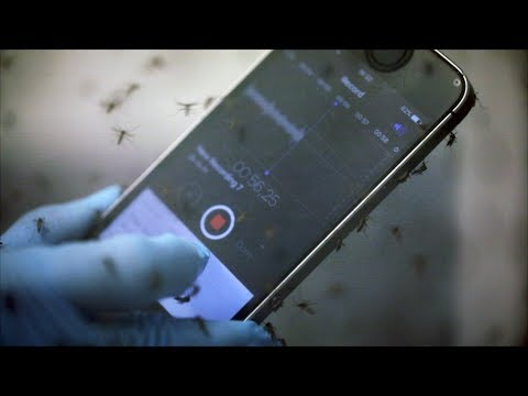 "Stanford researchers create ""Shazam"" for mosquitoes"