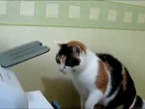 Mèo sửa máy in