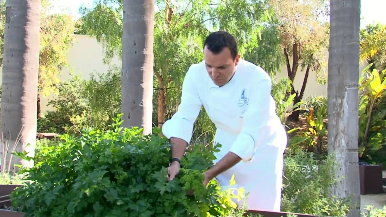 Tour The Garden With Executive Chef Of Ritz Carlton Laguna Niguel