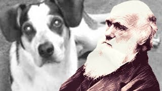 Darwin e o cachorro do Carrefour