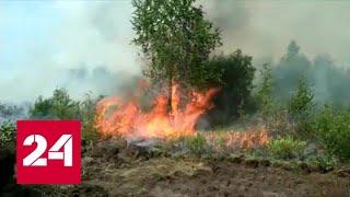 Площадь лесных пожаров в Якутии стремительно растет - Россия 24 