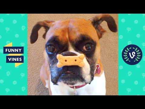 TRY NOT TO LAUGH – TOO CUTE! Funny Pets & Animals