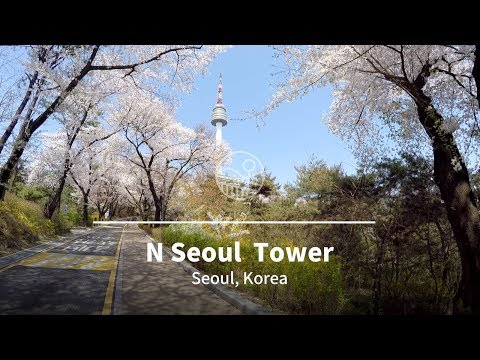 Walking tour to N Seoul Tower in Cherry Blossom, Seoul, South Korea 🇰🇷 / 남산 타워 도보 걷기 여행
