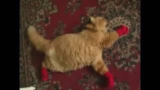 It's Always Sunny In Philadelphia   Kitten Mittens   With Extra Footage