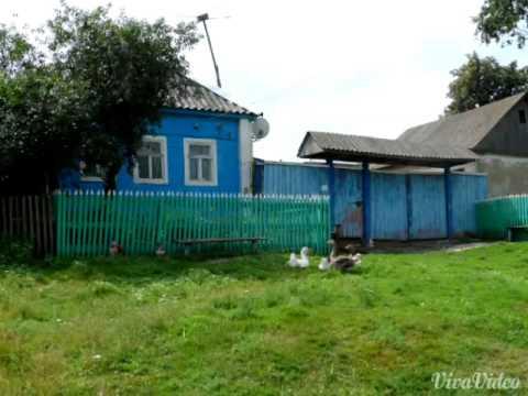 Воспоминания о деревне Щекино Курской обл . Рыльск