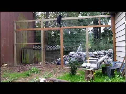 How to keep your cats from climbing a fence they can 39 t climb this cat proof fence youtube - Keep mites away backyard hiking ...