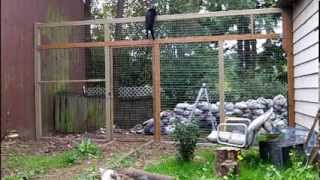 How to keep your cats from climbing a fence - They can