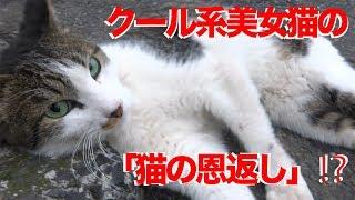 過去に登場した猫たちの現在についてはこちらをご参照いただければ幸いです。 http://blog.livedoor.jp/nekokamasu/archives/55185436.html 2013年夏の終わりにク...