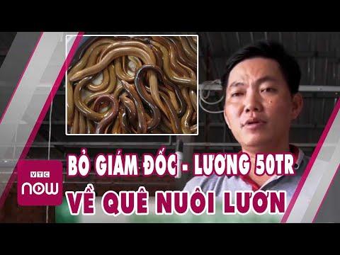 Giám đốc bỏ lương 50 triệu để khởi nghiệp nuôi lươn thu lãi khủng   Cuộc sống 24h nhà nông
