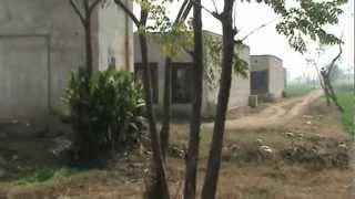 Kamalia poultry farm, pakistan.
