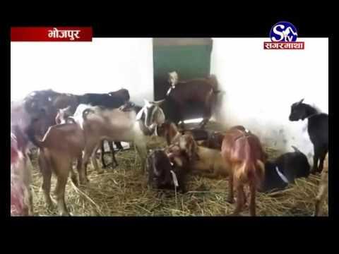 Bhukampa Pidit - Bhojpur