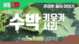 [체험존] 큰삼촌농촌체험 - 수박키우기 / 수박서리 /…
