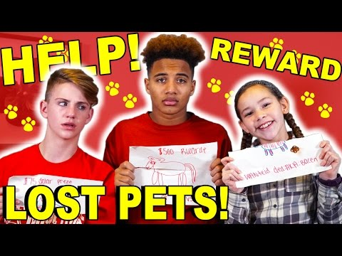 HELP!  LOST PETS!  REWARD IF FOUND!