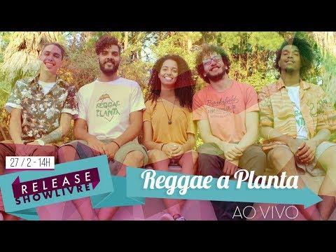 Reggae a Planta no Release Showlivre - Ao Vivo